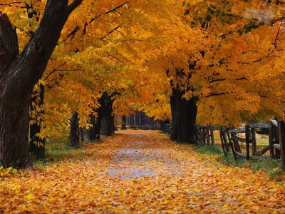 Now this is fall